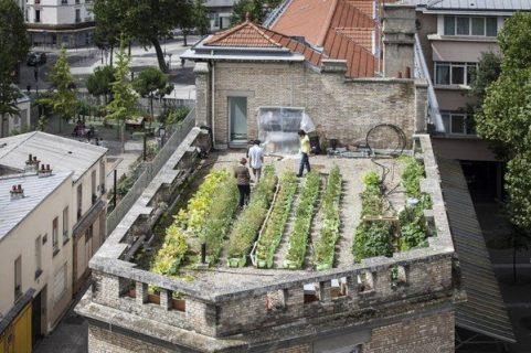 Bacs de plantations sur le toit des immeubles