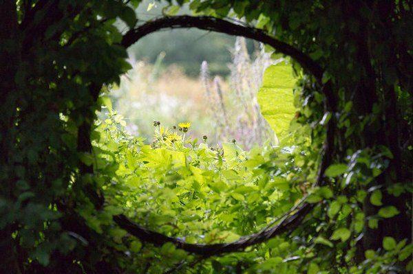 Vue sur des feuilles et des fleurs