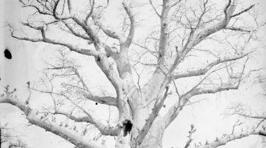 photo d'un arbre en hiver