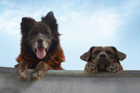 Photo de deux chiens sur un muré