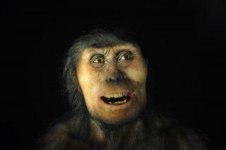 Reconstitution d'homme de Néandertal